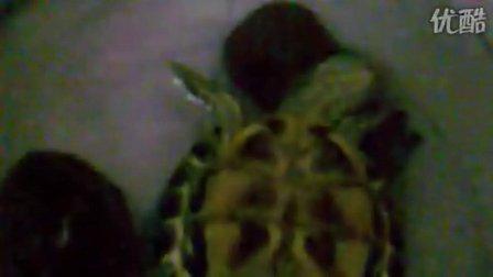 龟龟出逃记