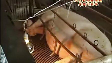 亿达利养猪技术知识2