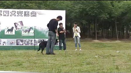2011年5月28名犬大会