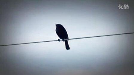 以鸟儿为灵感创作的美妙音乐