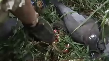 这么多的野鸭,多么准的枪法,看看人家怎么打野鸭吧!