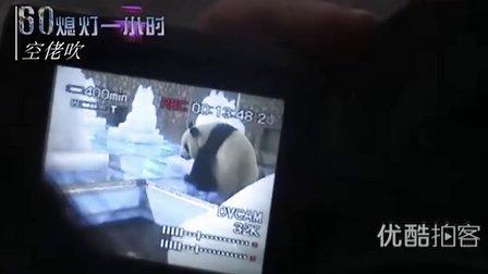 """【拍客】地球一小时:200斤重海归熊猫""""美兰""""亲手关灯全程"""