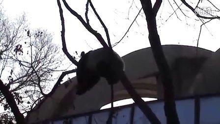 新年新气象-萌萌疯狂拆树-2012-1-2