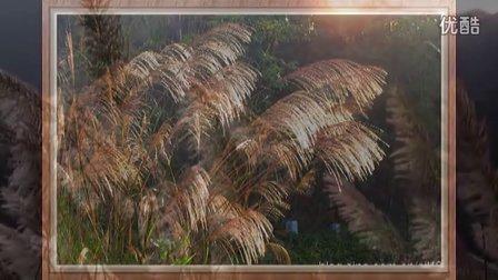 夕阳下的芦苇(舒缓的芦苇)