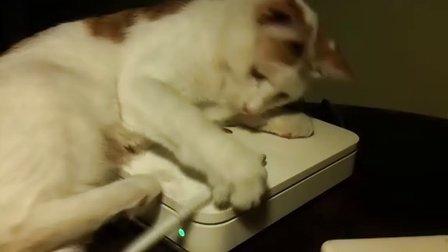 想学写字的猫