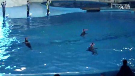 青岛海洋极地世界动物表演视频2