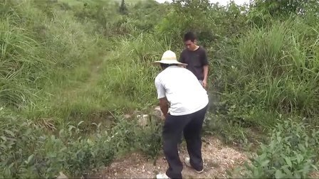 有机茶(宝坛有机茶采叶、剪枝、育苗)现场技术培训班.
