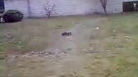 越野蛮牛玩车