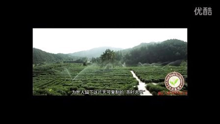祁门红茶(上) 港式奶茶 丝袜奶茶 奶茶原料 中国红茶 锡兰红茶