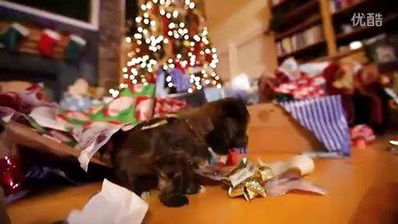 【激萌!小小狗的圣诞节】激萌圣诞礼物