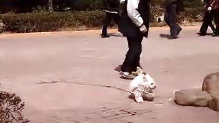 快乐的小狗(2)