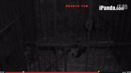 20131218被三熊争抢的一根幸福的竹子【真的幸福吗……
