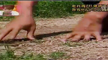 日本电视台报道八达岭野生动物世界