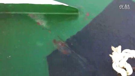 野生 海豚