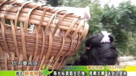 陈光标演唱会后续:猪呀 羊呀 送到这里来