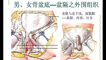 妇产科学 女性生殖系统发育与解剖