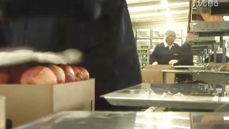 新西兰打工旅行 - 苹果包装