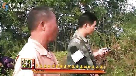 茂名在线直击赌王何鸿燊生基福地风水局!_标清
