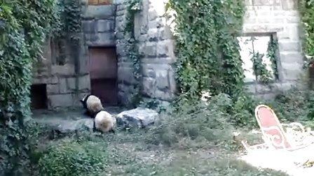 中秋节前,大小白兔在做什么呢,姐姐很兴奋