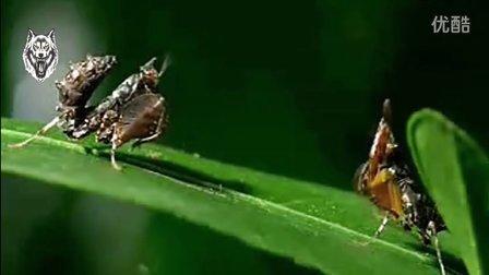 宇宙间的各色螳螂们