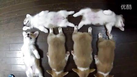 六只可爱小狗的消魂睡姿