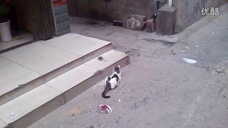 寂寞的小猫咪