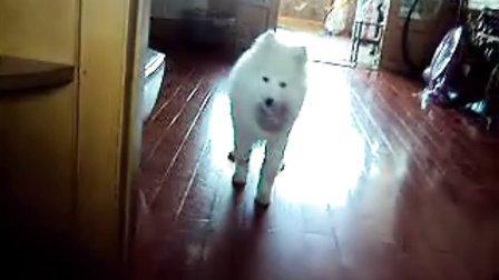 喜欢玩球的狗狗