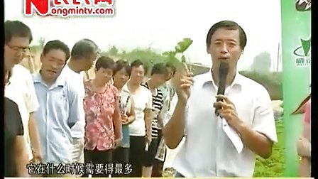 农博士在行动威远根力多专题之农博士大棚草莓定植前管理——燕国胜