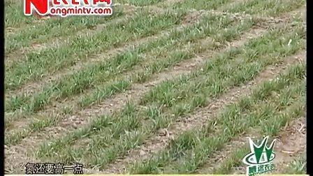 农博士在行动威远根力多专题之作物施肥误区解析无极——燕国胜