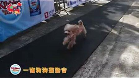 一寵狗狗奧運會(CANNED MUSIC)