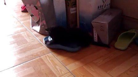 黑仔日记20121106