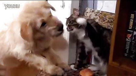 搞笑动物!猫狗决斗争夺汉堡包