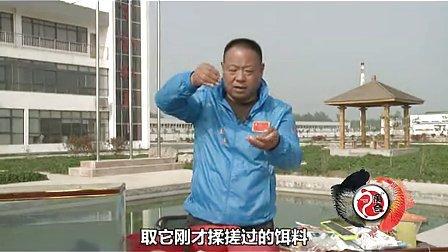 春季钓鲫鱼鲤鱼《跟王桂龙学钓鱼》 饵料篇(三) 高清