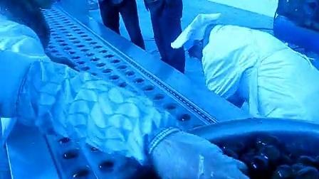 康贝特食品包装机械的包装机:湖北房县原生态鸡蛋现场使用