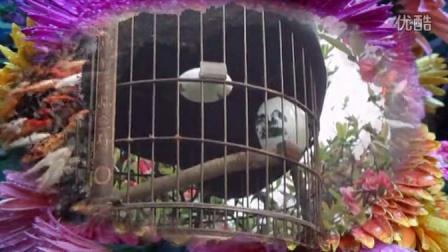 爱唱歌的画眉鸟