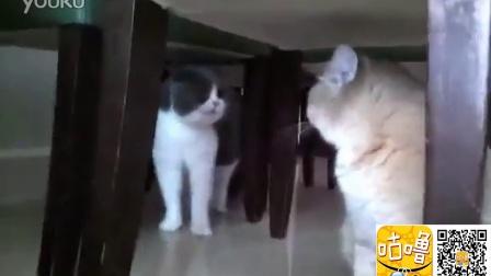 猫猫激烈骂战 互不相让
