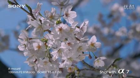 sony 发布 α7S无可比拟的4k视频质量