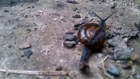 蜗牛在行动