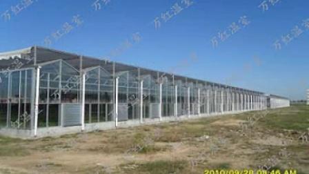 连栋温室大棚,温室大棚建设,万红温室大棚,温室建设