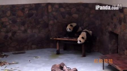 《健康歌》熊猫MV