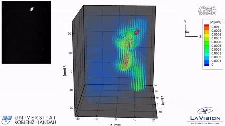 大型蚤自由游动的层析PIV测量 (Univ. Koblenz LaVsion)