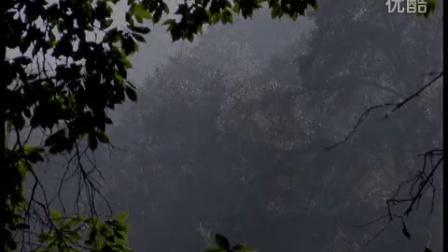 森林丽影(昆明西山)