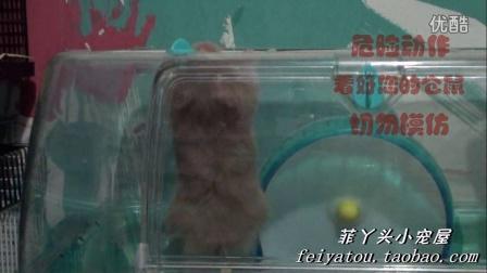 小宇仓鼠系列视频第一集之啃笼子篇