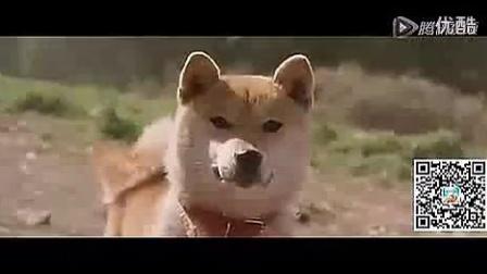 鲁甸地震后忠心的狗狗救主,请自备纸巾