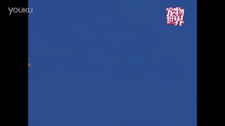 """2014第六届猫节嘉年华——""""喵星魔法派对""""预告"""