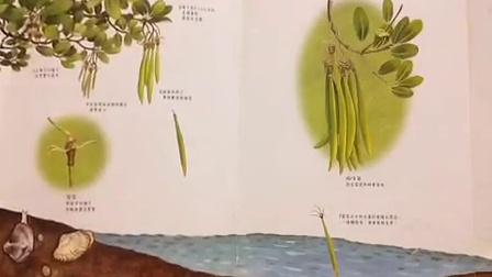【CMCN分享】洪老師說故事--《到紅樹林去玩》绘本