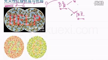酷学习遗传病-先天性红绿色盲与色弱