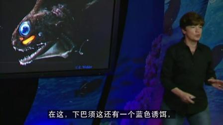 大痣网_EdithWidder_Glowing life in an underwater world_中文_高清