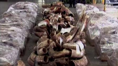 《狂野非洲》保护大象特别版纪录片