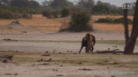 狮子与大小象